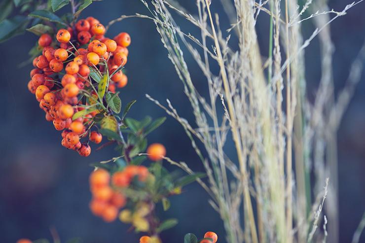 Inspiration-automne©monsieurplusmadame-38